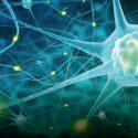 Serotonin und Neuroplastizität bei Depression